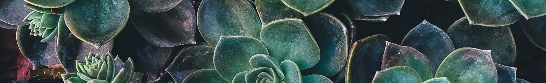 Vitamina Verde Terapia Hortícola